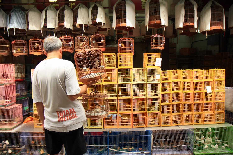 Bird market, Hong Kong